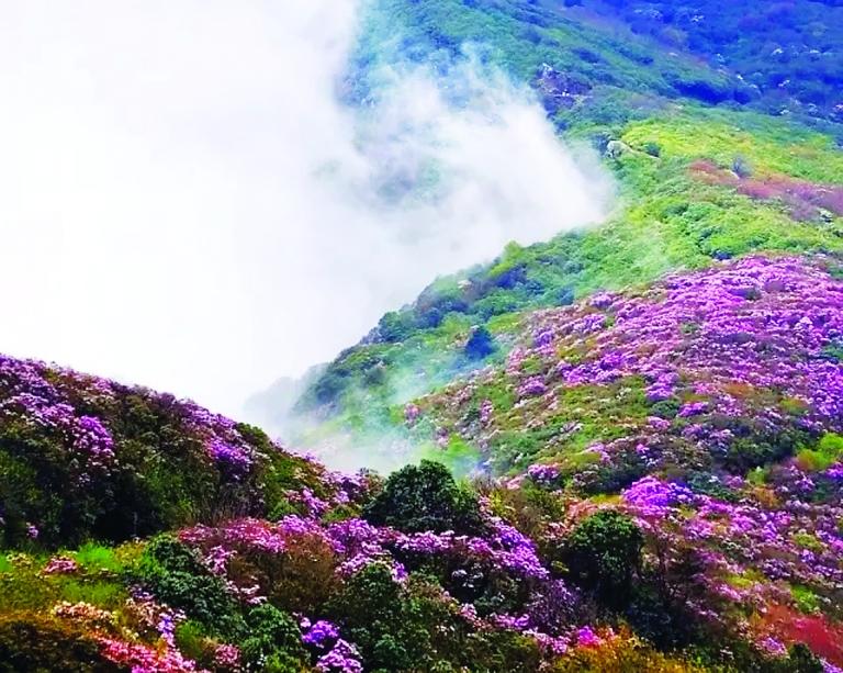 木龙风景区,龙头山花海和二滩省级鸟类自然保护区,有我市最高峰百灵山